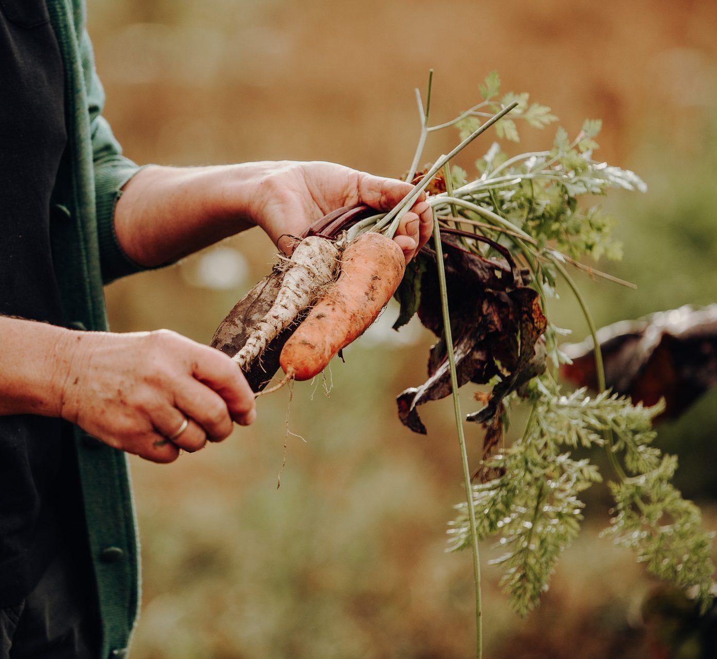 Hirn Gemüse
